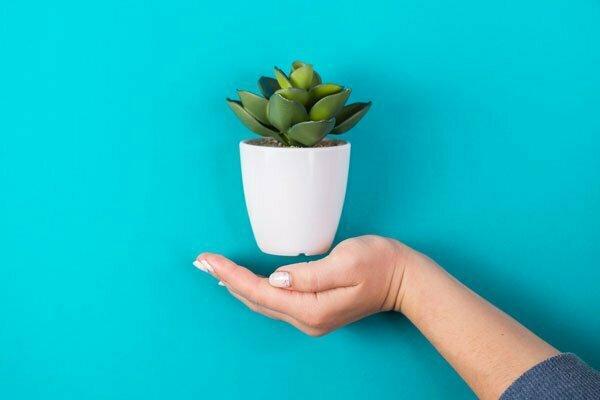 כיצד לעצב את הבית עם צמחים מלאכותיים, עלי דפנה