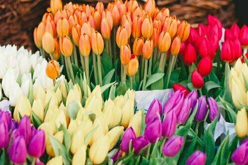נעים להכיר! חנות פרחים רמת גן, עלי דפנה